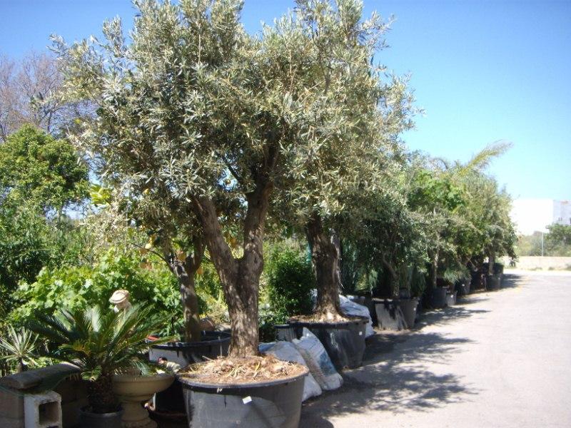 Viveros reyes dise o y construcci n de jardines for Viveros de arboles en madrid