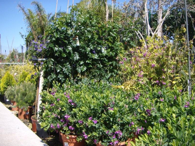 Viveros reyes dise o y construcci n de jardines for Viveros y jardines