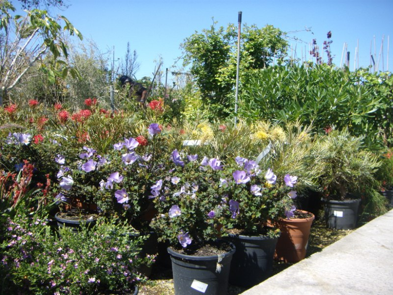 Viveros reyes dise o y construcci n de jardines for Plantas decorativas de exterior