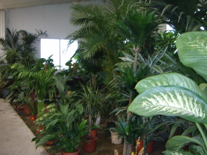 Viveros reyes dise o y construcci n de jardines for Viveros plantas de interior