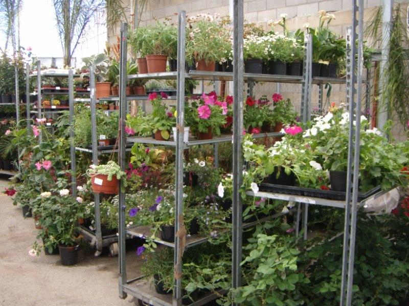 Viveros reyes dise o y construcci n de jardines for Viveros plantas en temuco